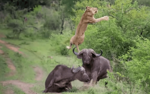 animals-fight-for-their-life1