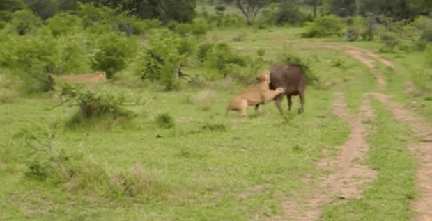 animals-fight-for-their-life2
