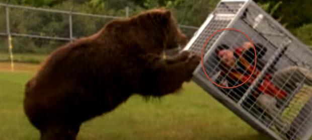 When A 1300 Lb Brown Bear Attacks Buzzsun